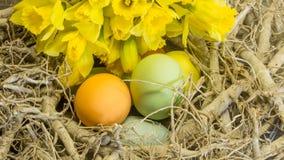 Pâques a peint des oeufs Photo stock