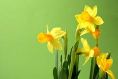 Pâques venant bientôt Photo stock