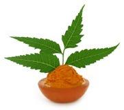 Pâte de safran des indes avec des feuilles de neem Images stock