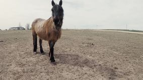 Pâturage à cheval sur le terrain banque de vidéos