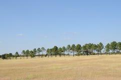 Pâturage avec des arbres Photo stock