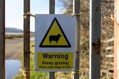 Pâturage d'avertissement de moutons Images libres de droits