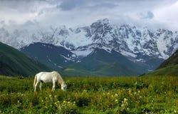 Pâturage dans Svaneti Image libre de droits