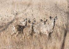 Pâturage de cerfs communs images stock