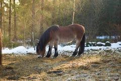 Pâturage de chevaux Photographie stock