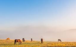 Pâturage de chevaux image stock