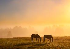 Pâturage de chevaux Photographie stock libre de droits