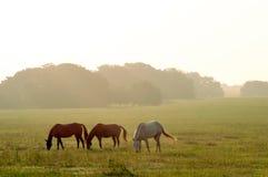 Pâturage de chevaux Photos libres de droits