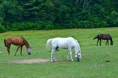 Pâturage de chevaux Photos stock