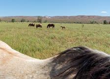 Pâturage de chevaux Images libres de droits