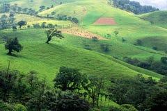 Pâturage de flanc de coteau du Costa Rica Photo libre de droits