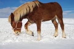 Pâturage de l'hiver images stock