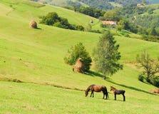 Pâturage de la jument avec son poulain sur de belles collines vertes Image stock