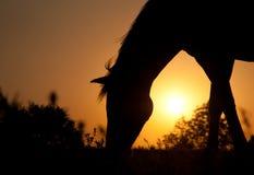 Pâturage de la silhouette de cheval contre le Soleil Levant Image stock
