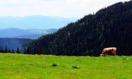 Pâturage de montagne Image libre de droits