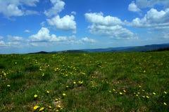 Pâturage de montagne Photo stock