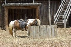 Pâturage de poney Image libre de droits
