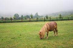 Pâturage de poney de Brown Photo libre de droits