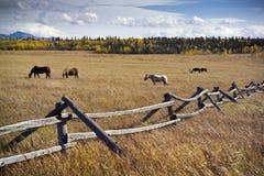 Pâturage des chevaux Photos libres de droits