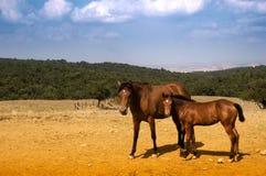 Pâturage des chevaux Images libres de droits