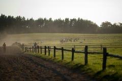Pâturage des chevaux Image stock