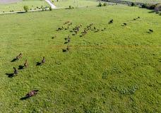 Pâturage des chevaux sur la zone Chevaux de tir de quadrocopter Pâturage pour des chevaux Photo libre de droits