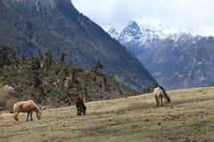 Pâturage des montagnes Images libres de droits