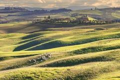 Pâturage des moutons dans le beau paysage toscan Images stock