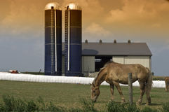 Pâturage des silos de grange de cheval Photos libres de droits