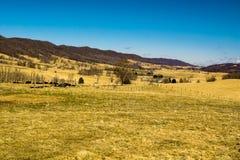 Pâturage des vaches en vallée bleue d'herbe photos stock
