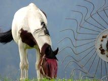 Pâturage du cheval Photographie stock libre de droits