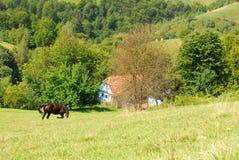 Pâturage du cheval sur de belles collines vertes Photographie stock libre de droits