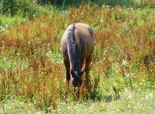 Pâturage du cheval un jour d'été Images stock