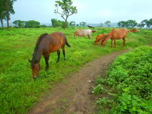 Pâturage-II de chevaux Photo libre de droits