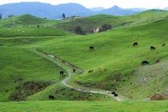 Pâturages et moutons verts photos stock