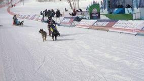 Półwysep Kamczatka dzieciaków rywalizacji Psi sanie Ściga się Dyulin Beringia zdjęcie wideo