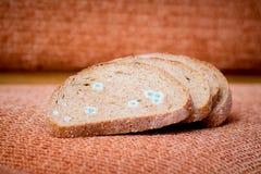 Pão bolorento seco Food_ estragado, não-consumível imagens de stock