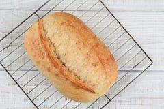 Pão fresco do close up Imagem de Stock