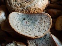 Pão Moldy Fotos de Stock