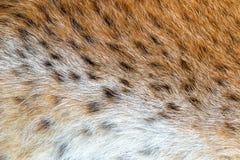 Päls för löst djur för textur prickig Royaltyfri Foto