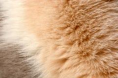 Päls för ` s för katt för bakgrundstexturbrunt Arkivbilder
