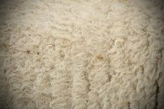 Päls för vita får med karaktärsteckning royaltyfria bilder