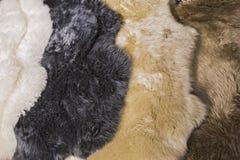 Päls flår för fårskinnhudar för inredesignen, vit, svart, beiga, brunthudtexturer arkivbild