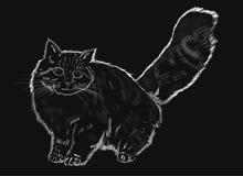 Päls- grå katt Royaltyfria Bilder