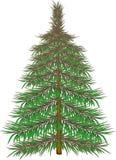 Päls- gran-träd Arkivbilder