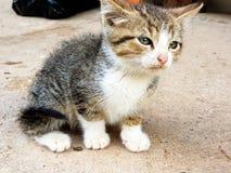 Päls- kattunge Arkivbilder