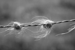Päls på försett med en hulling - tråd Fotografering för Bildbyråer