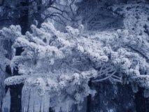 Päls-träd filial i fluffig snö Arkivbild