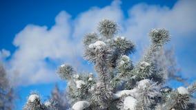 Päls-träd filial med is Arkivfoto