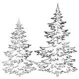 Päls-träd konturer Arkivfoto
